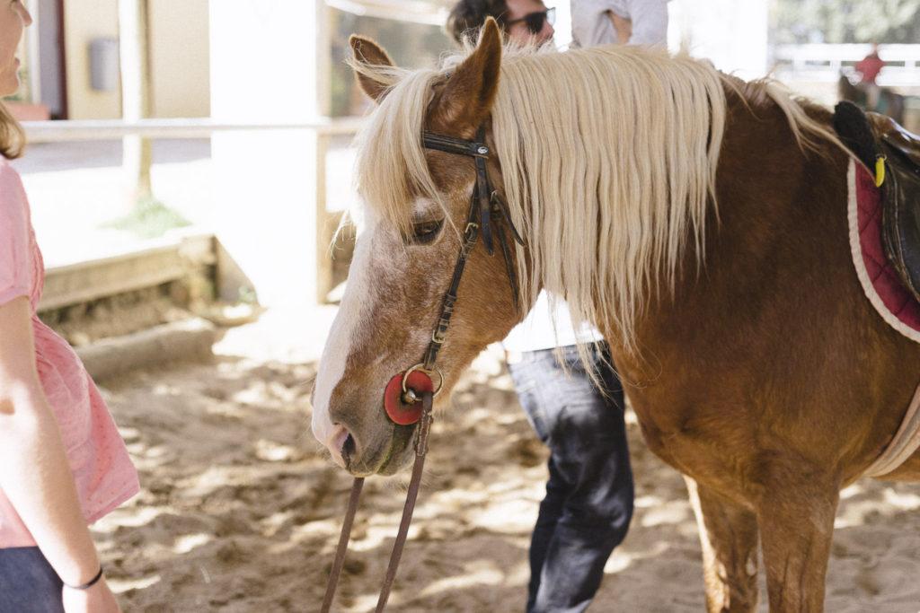 Oui Oui-caballos de guadalajara-marta machin (33)