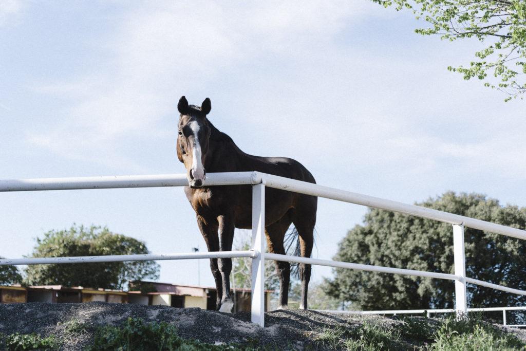 Oui Oui-caballos de guadalajara-marta machin (57)